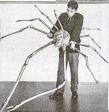 220px-japanese_spider_crab