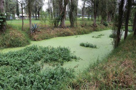 lago_superficie_verde