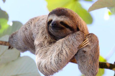 sloth-600x395